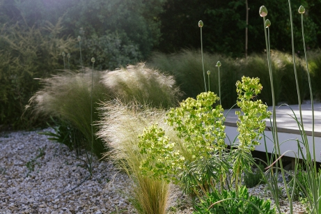 Euporbia with Stipa tenuissima behind