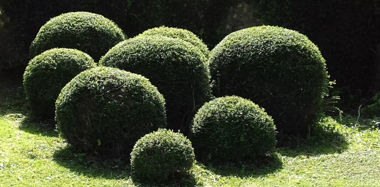 topiary3.jpg