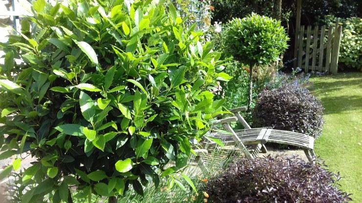 Topiary4