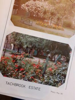 Planting at Tachbrook 1980